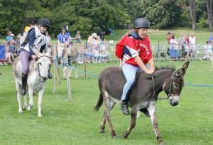 Donkey-racing-in-Guernsey