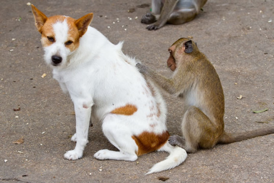 fleas-inspection-on-dog